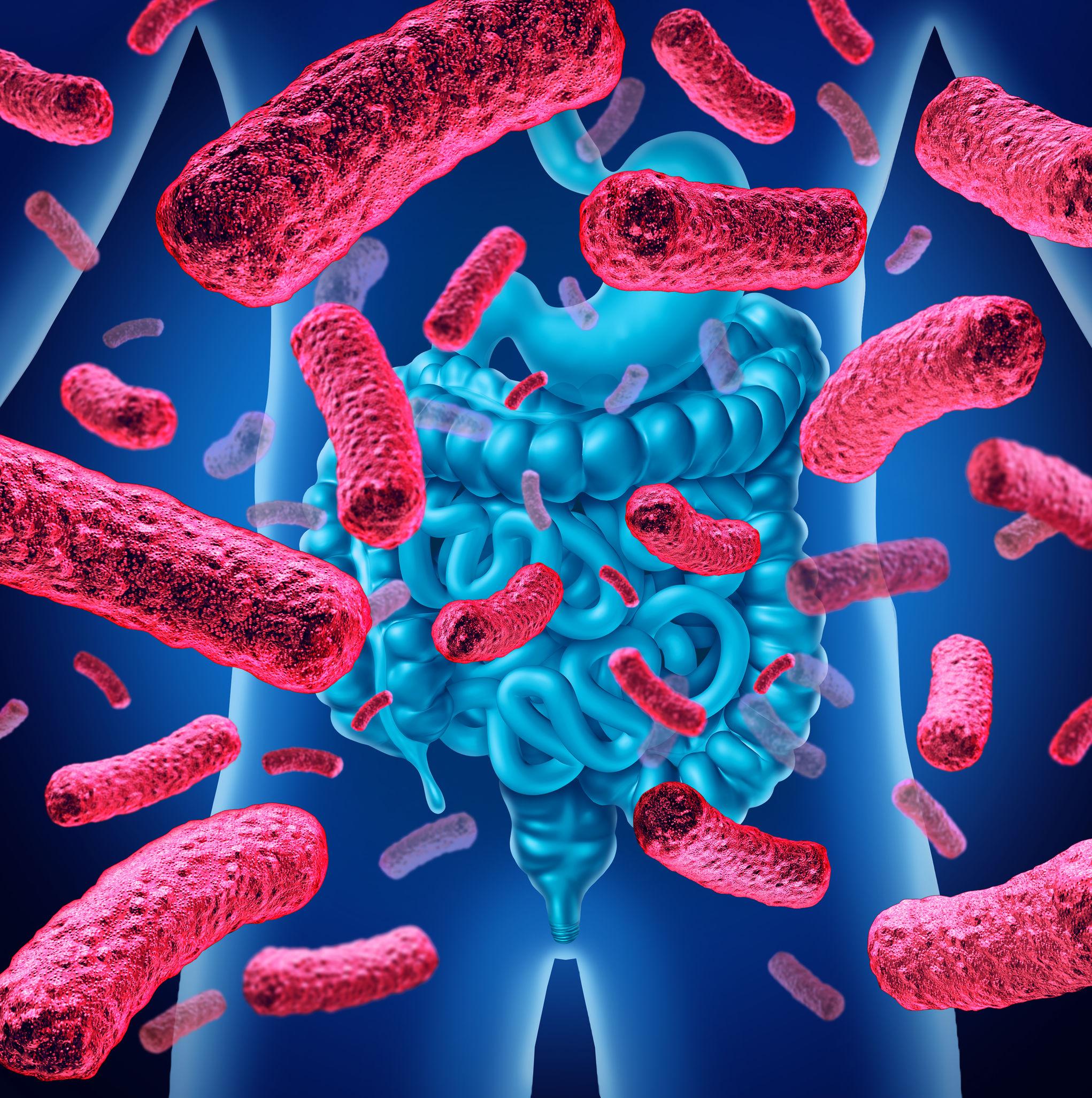 Il microbiota intestinale il controllore del sistema immunitario